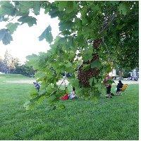 swarm_in_tree.jpg