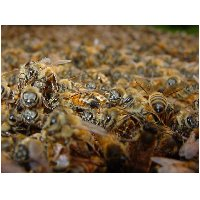 more_bees.jpg